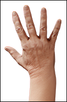 Retopologized 3D Hand scan of Maliah Sargent European female