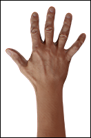Retopologized 3D Hand scan of Reece Burke European male