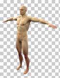 human figure2 tpose